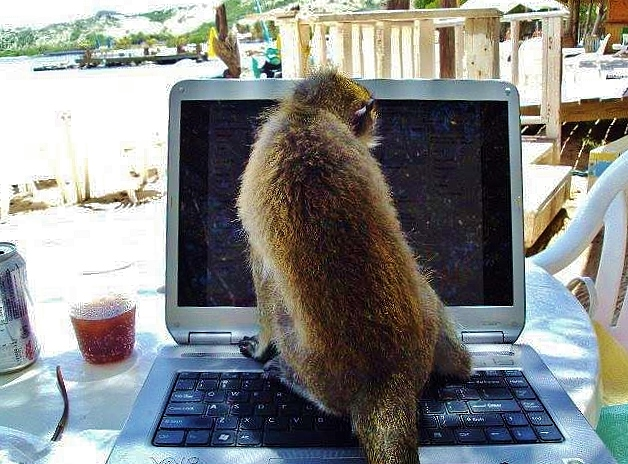 Oliver the Monkey sharing computer with Renee Petrillo
